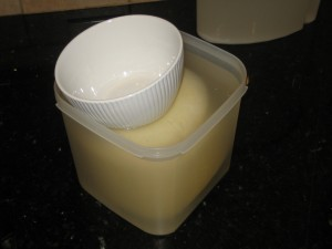 2 kg Havarti bathing in water based brine incorrectly using weight to submerge.