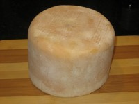 Gouda With  Natural Rind & Natural Protective Geotrichum candidum Mold Development - CheeseForum.org