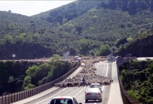 South Portugal Sheep Crossing Bridge - CheeseForum.org