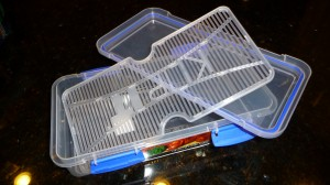 Ripening Container - Small, Manufactured Sistema Klip It Brand Deli Storer Plus Model With Propped Tray, Apart - CheeseForum.org